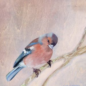 """Chaffinch l"" - Open Edition Print by Lara Cobden"