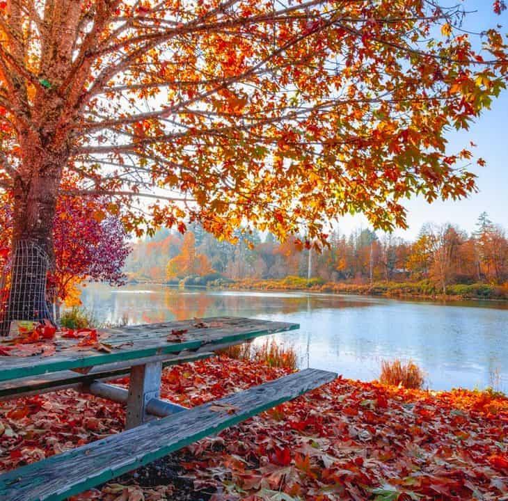 Easy Keto Dessert - Autumn Leaves Photo by Jake Colvin from Pexels
